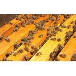 Продам ульи в комплекте с пчелами