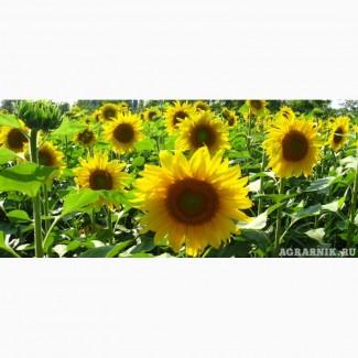 Гибриды семена подсолнечника ПР64Ф66, ПР62А91, ПР63А90, ПР64Ф50, ПР64А89, ПР64Х32 Pioneer