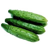 Закупаем Огурцы среднеплодные 1 сорт на постоянной основе
