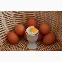 Продам яйцо куриное столовое и диетическое