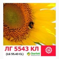 ЛГ 5543 КЛ гибрид подсолнечника ЛИМАГРЕЙН (Limagrain)