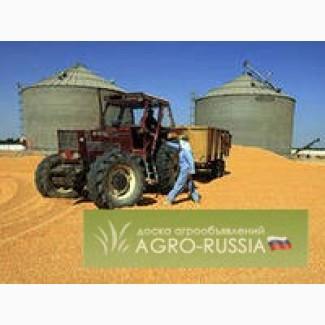 Пшеница 5 класса (фураж)