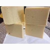 Продам сырный продукт Голландский, Российский