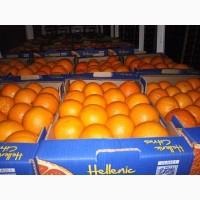 Предлагаем приобрести у нас грейпфрут сорта Дункан по оптовой цене