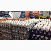 Куриные яйца от производителя оптом 49, 5 р/десяток