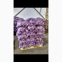 Продаю продовольственный картофель калибр 5+ сорт гала Ред Скарлет радрига джувел лаббела