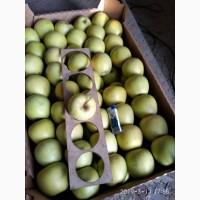Яблоки из Крыма оптом
