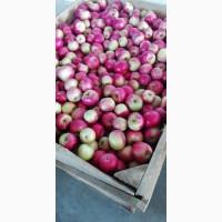 Продам Яблоки различных сортов