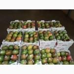 Предлагаем прямые поставки манго из Бразилии