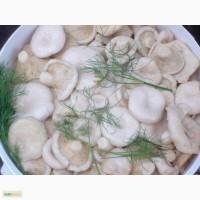 Продаю грибы грузди