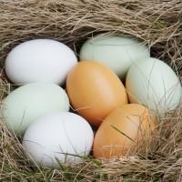 Яйцо куриное С0, С1, С2 оптом по цене производителя