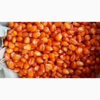 Семена гибридов кукурузы 25000 рос. р/тонна