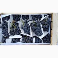 Виноград из Узбекистана контроль качества все сорта