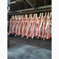 Продам полутуши говяжьи от производтеля
