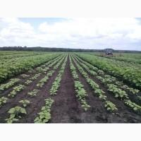 Внесение почвенного гербицида