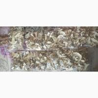 Продам белый сушенный гриб, родом с Алтая