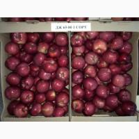 Яблоко сезонное опт
