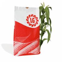 LIMAGRAIN (ЛИМАГРЕЙН) - гибриды кукурузы (Франция)