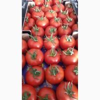 Продам помидоры тепличные