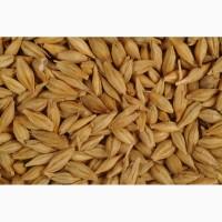 Скупаем семена сельскохозяйственных культур