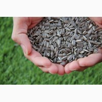 Семена подсолнечника Кубанский 930