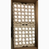 Закупаем по предоплате куриное яйцо