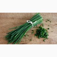 Зелёный лук перо оптом купить