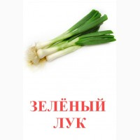 Зеленый лук, зелень, редис, огурцы