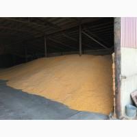 Кукуруза, пшеница, ячмень на Экспорт FOB CIF