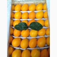 Лимон Узбекистан