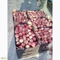 Яблоко беларусское