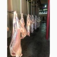Продаем Мясо (Баранина и Курятина)