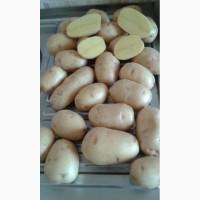 Продаем картофель, подходит для мойки сорт Гала и Королева Анна