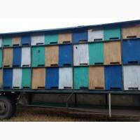 Продаётся пчелопавильон шкафного типа с пчёлами