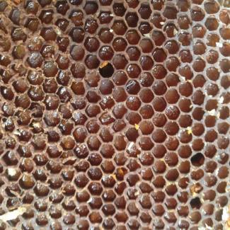 Пчелиная перга, пыльца