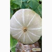 Семена тыквы. Сорт Заславия