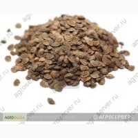 Продам: Семена эспарцета Песчаный 1251