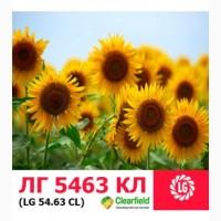 ЛГ 5463 КЛ гибрид технологии SUNEO (Clearfield+устойчивость к 7 расам заразихи) ЛИМАГРЕЙН