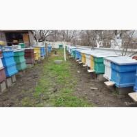 Продам пчелосемьи, пчелы Карпатской породы