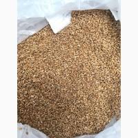 Продам пшеницу, овес, горох, ячмень