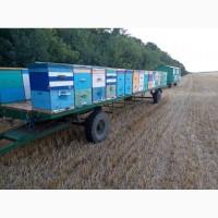 Продаётся пчелоприцеп с пчёлами