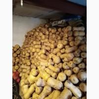 Тыква матильда, орешек, витаминная