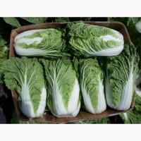 Продаем пекинский салат
