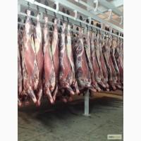 Мясо-говядина коровы в полутушах 1 и 2 категории оптом по ГОСТ Р 54315-2011