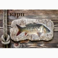 Живая рыба Карп для пруда