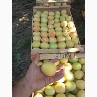 Продам отборный абрикос араратской долины. сорт шалах