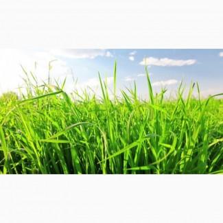 Газонные травосмеси