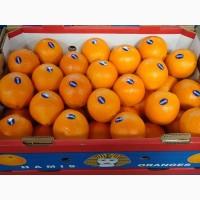 Предлагаем прямые поставки апельсина Египта