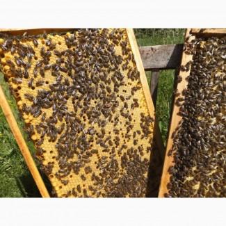 Пчелопакеты карника опт розница
