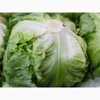 Продам салат Айсберг урожай 2021 года ОПТ